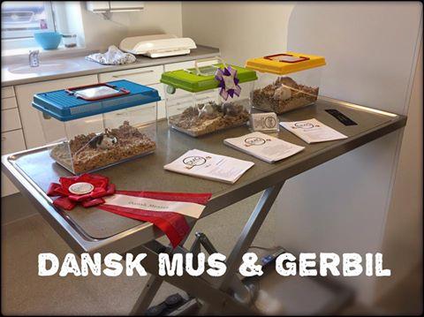 Åbent hus – Dyrehospital City Syd Aalborg