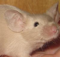 CP-beige