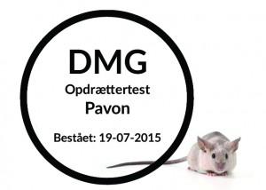 Pavon copy